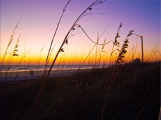 Sea Oats at Sunrise on Daytona Beach II