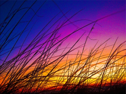Sea Oats at Sunrise on Daytona Beach III