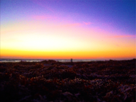 Seaweed on the Beach Mixed with Sand at Sunrise