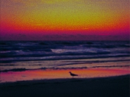 New Photo Art Titled: Mystic Morning Dawn At the Beach Pastels, Digital painting from photo of silhouette of seagull walking at waters edge dawn sunrise over the Atlantic Ocean in Daytona Beach Shores Florida