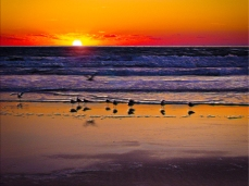 New Art Titled: Birds Playing in the Surf at Sunrise. Modern digital artwork from photograph of birds playing in the surf, on Daytona Beach in the early morning.