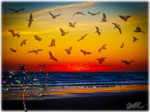 New Art Titled: Tequila Sunrise Atlantic Ocean Groovy Palm Tree Art. Photo edit & art first of photograph of sunrise just as the sun turns the clouds a bright red but is net yet visible itself over the horizon. In addition to the seabirds clearly visib