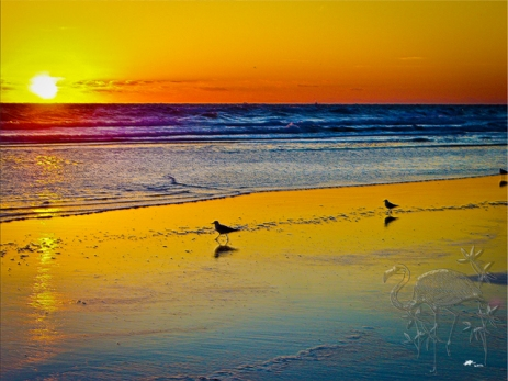 New Art Titled: Ocean Sunrise & it's Reflection on Beach & Birds.