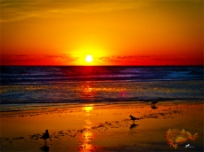 New Art Titled: Ocean Sunrise & it's Reflection on Beach & Birds II. Original sunrise image with the sun completely over the Atlantic coastal horizon and reflecting over the ocean, waves and beach, in a rainbow of vibrate colors. Three birds walking al