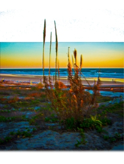 New Art Release Titled; Coastal Plants Sand Dunes Beach And Ocean. Digital art edit of coastal landscape at sunrise in Daytona Beach Florida, including plants sand dunes, the beach and the ocean