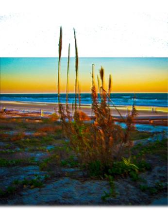New Art Release Titled; Coastal Plants Sand Dunes Beach And Ocean. Digital art edit of coastal landscape at sunrise in Daytona Beach Florida, including plants sand dunes, the beach and the ocean